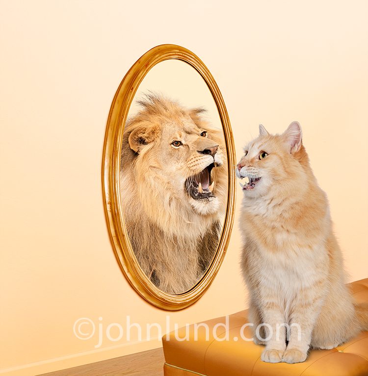 Kitten-Lion-Mirror-Roar